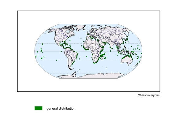 map about the distribution of Chelonia mydas