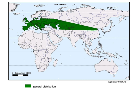 map about the distribution of Nyctalus noctula